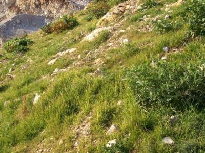 idrosemina ecogreen terni